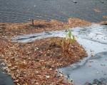 Vegitation-Growing-on-Flat-Roof.jpg
